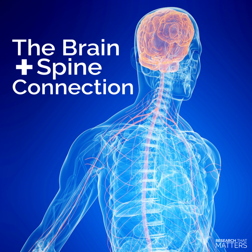 The brain and spine connection